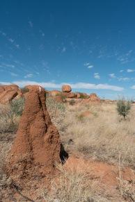 Des grosses termitières
