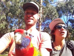 Les oiseaux multicolores