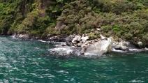 Rocher des phoques