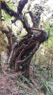 Un arbre funny