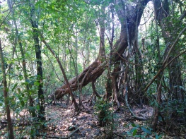 Forêt Cat Tien