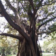 Des arbres impressionants