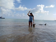 Les dauphins @ Monkey Mia
