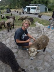 Caresser des moutons