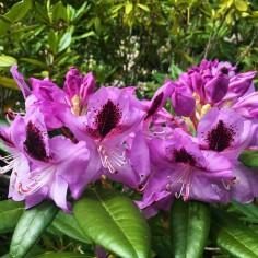 Jardin botanique Taupo