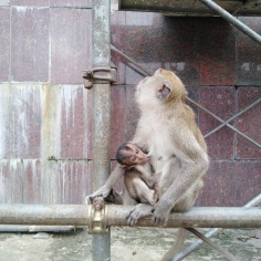 Monkeys Batu Caves