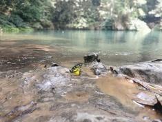 Pac Bo Papillon