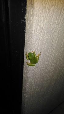 La p'tite grenouille devant la porte